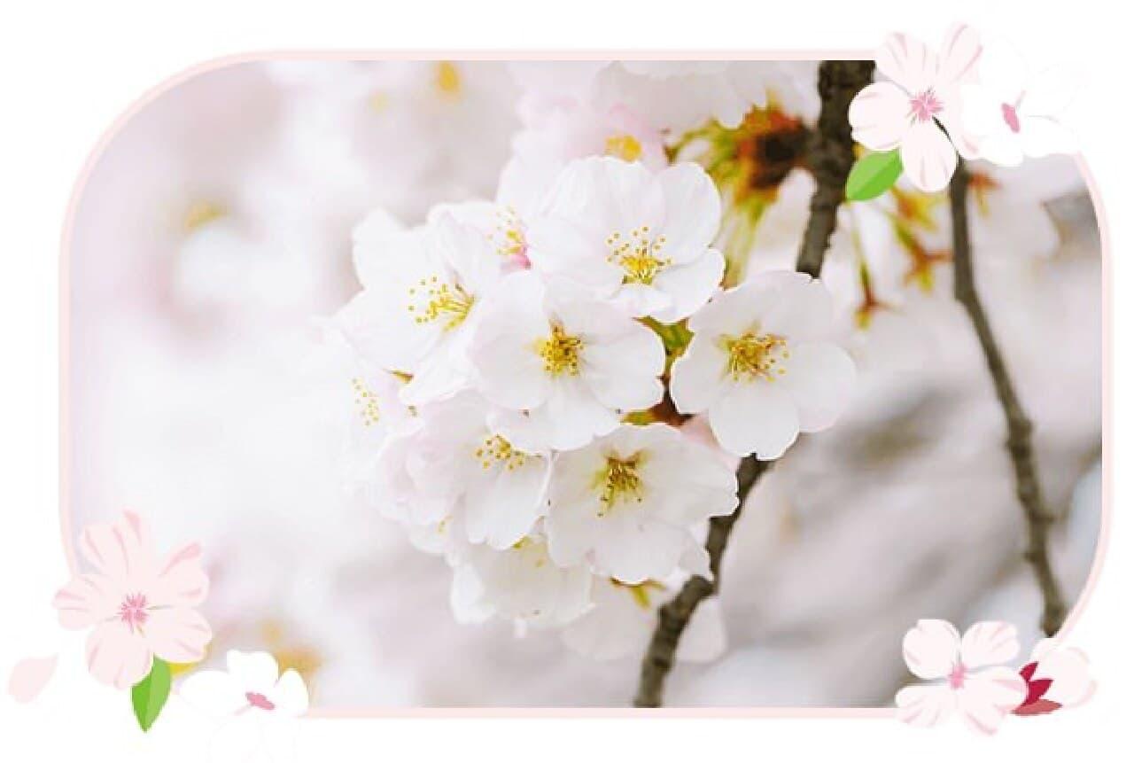 2019年春限定プレミアムルルルン(桜の香り)