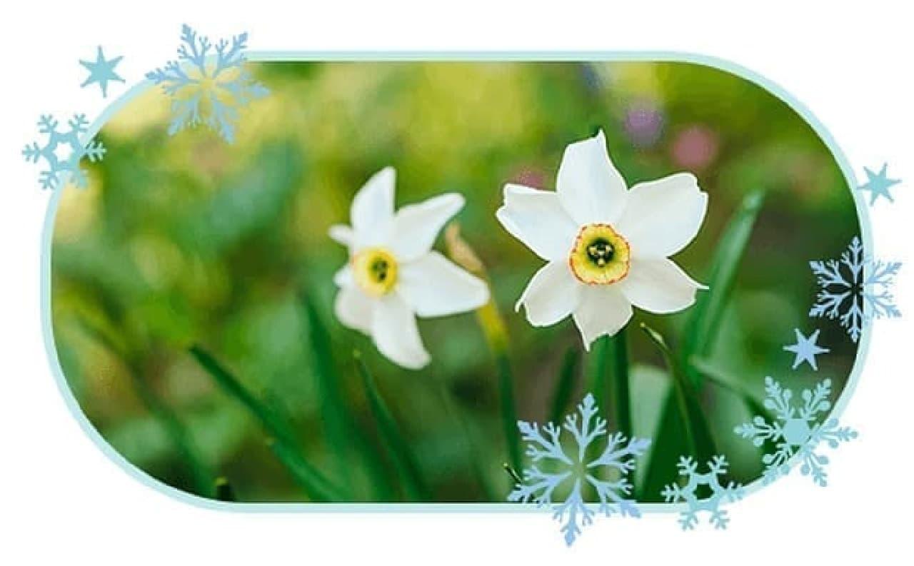 冬限定 プレミアムルルルン雪(ホワイトバニラの香り)に使われた雪中花