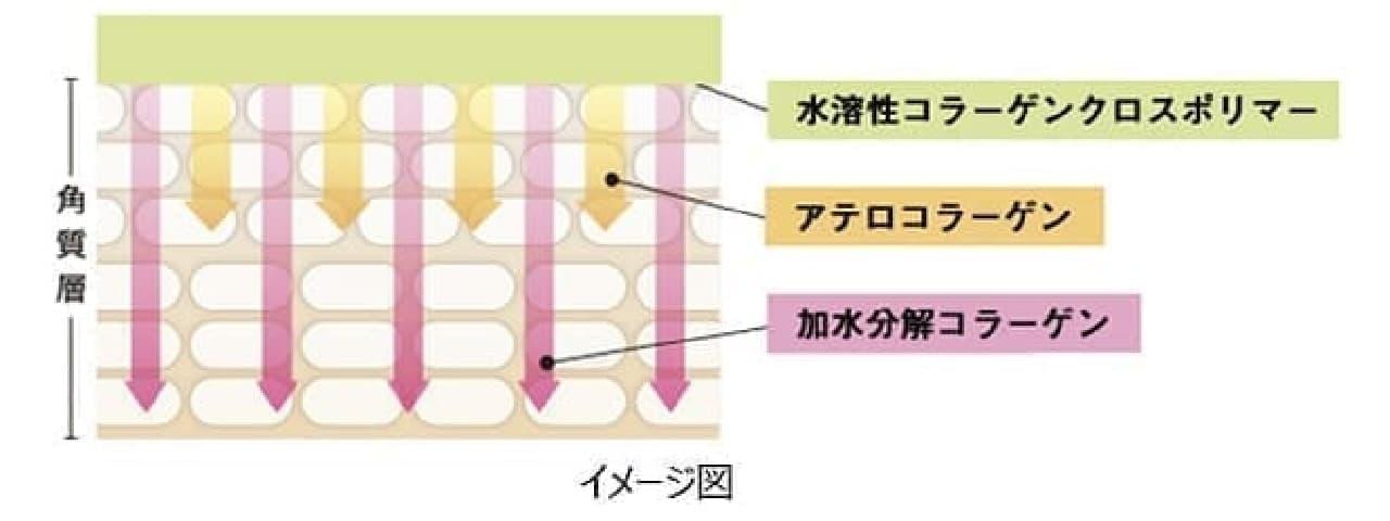 3種のコラーゲンが肌に浸透するイメージ
